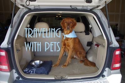 travel with pets.jpg