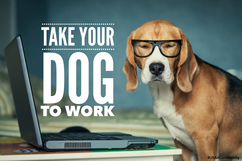 USAA-Member-Community-Pet-To-Work-Hashtag.png