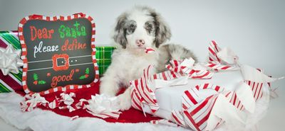 USAA Community Was your Pet on the Naughty or Nice List.jpg