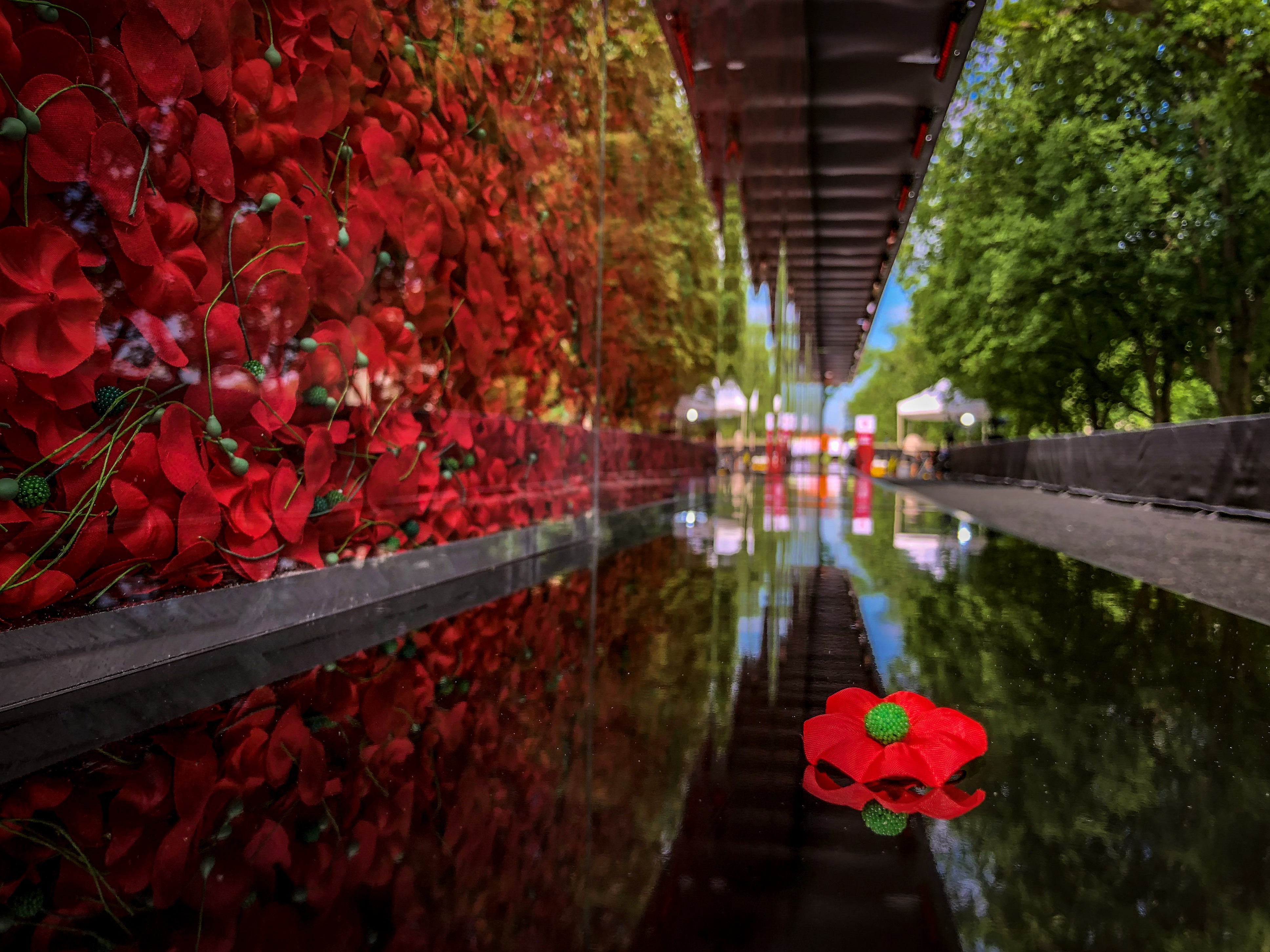 Hundreds of Thousands of Poppies Return to the Nat    - USAA