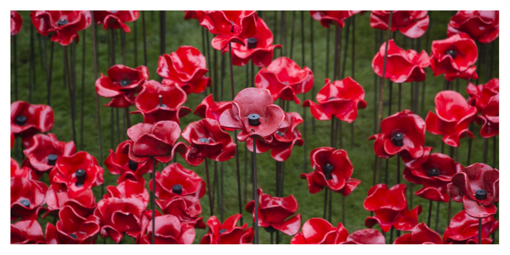 USAA Community Dedicate a Poppy.png
