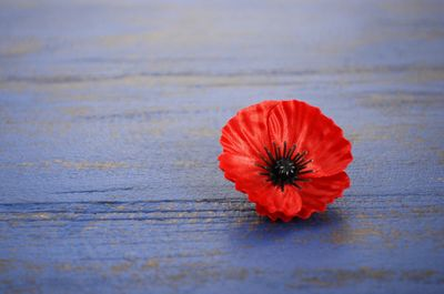 USAA Community Dedicate a Poppy Discussion sm.jpg